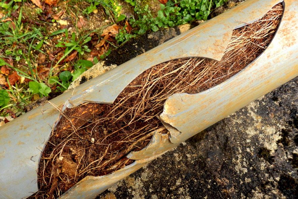 blocked-drains-plumber-sydney
